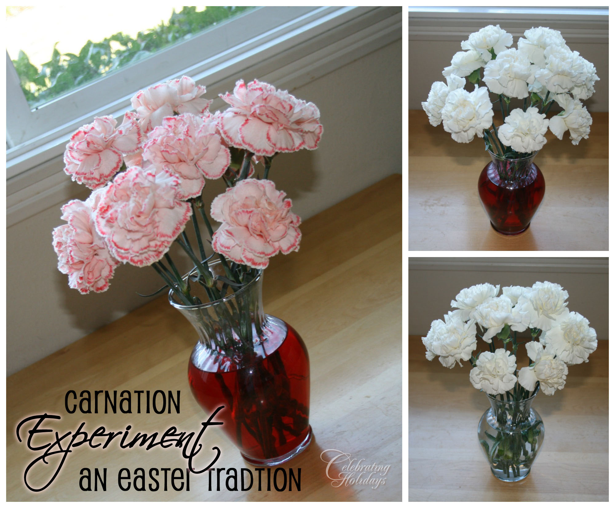 Carnation Experiment For Easter