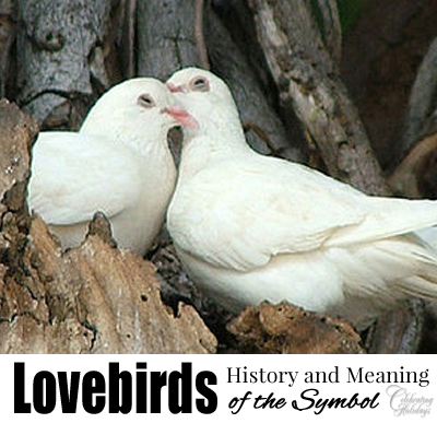 Lovebirds, A Symbol of Valentine's Day