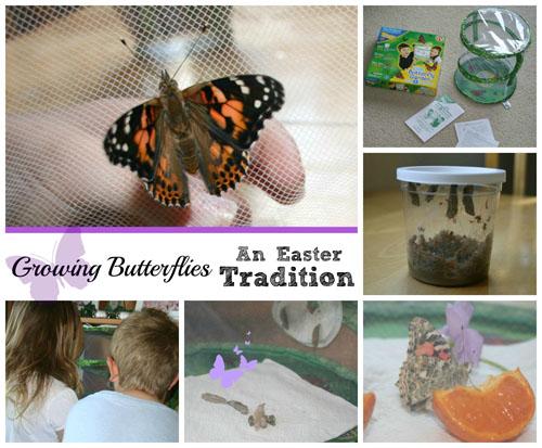 Growing Butterflies